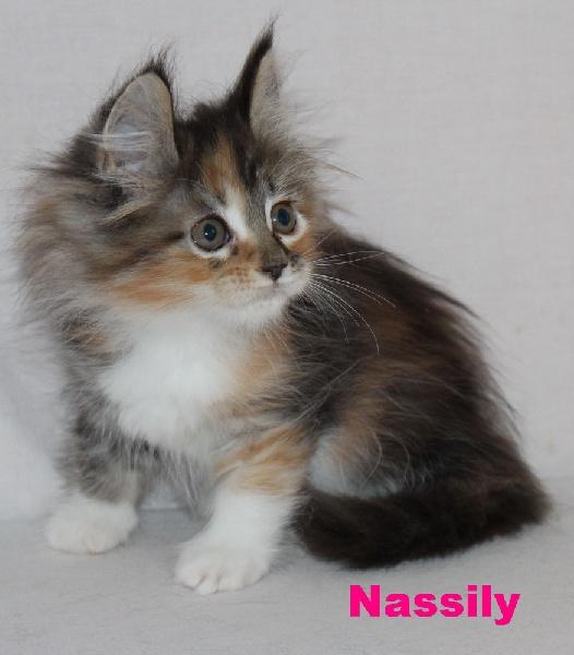 NASSILY -