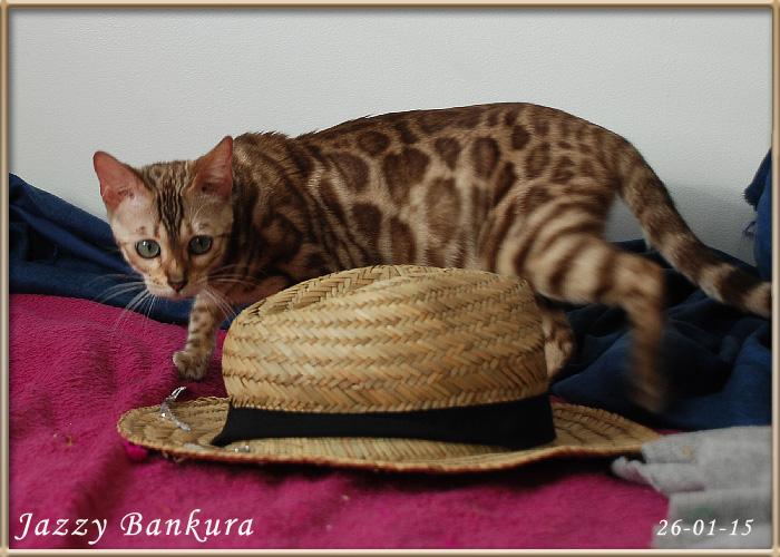 Jazzy Bankura