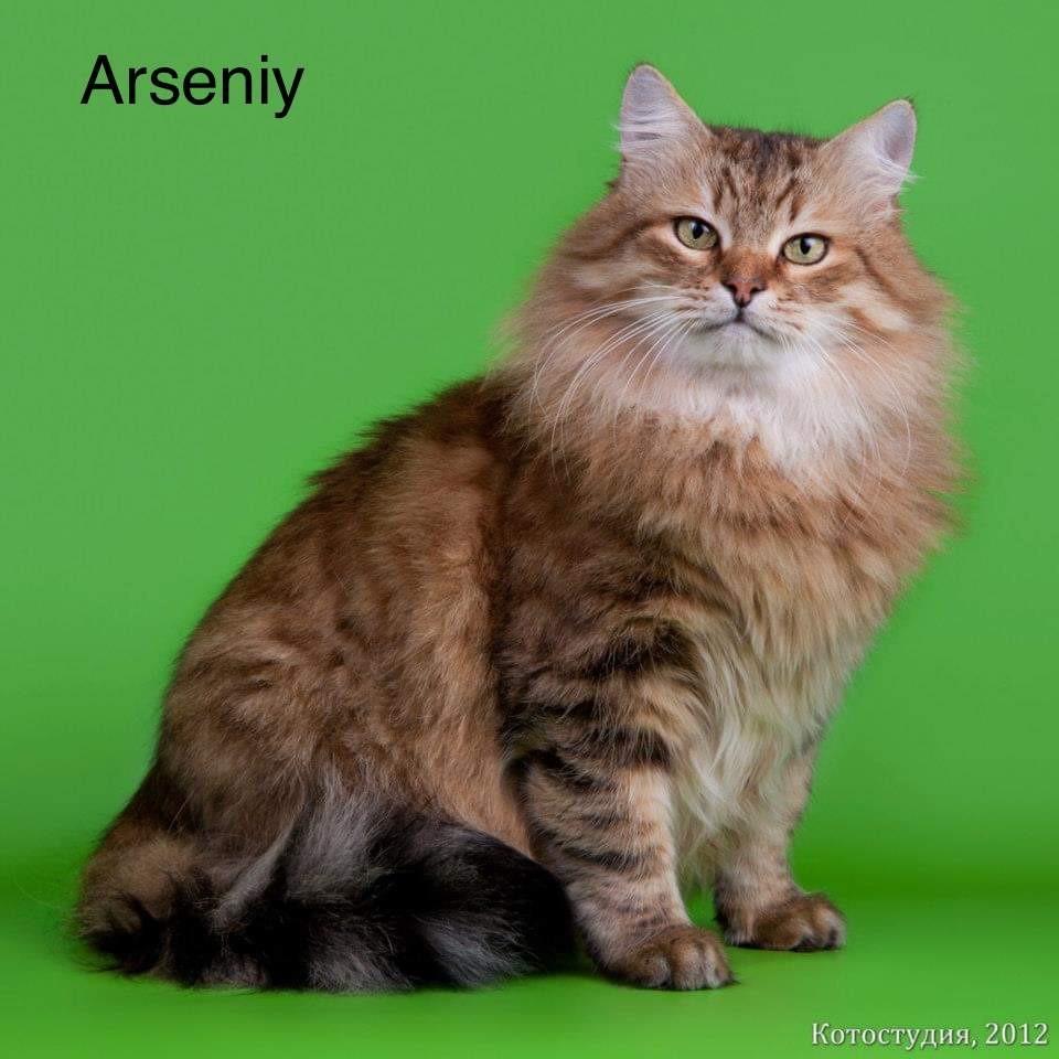 Sibérien - Arseniy volzhskaya Titre Initial