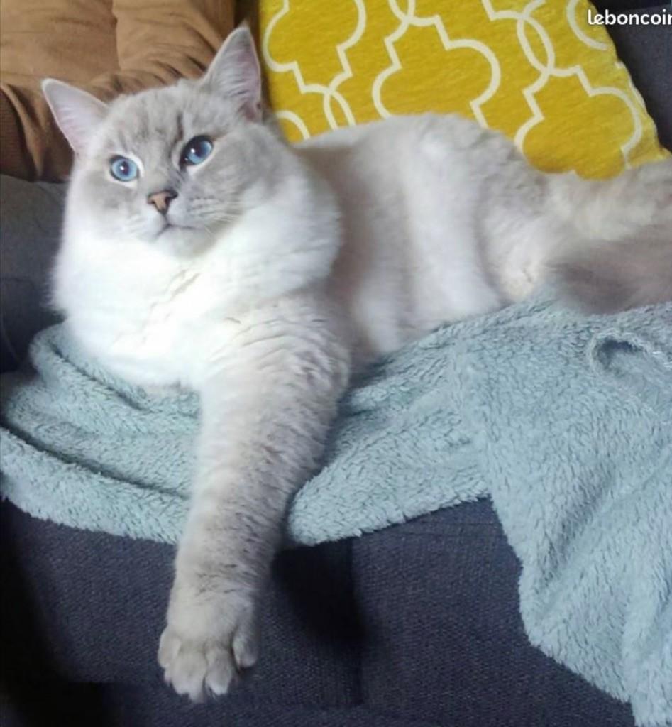 Malibu Meow Meow