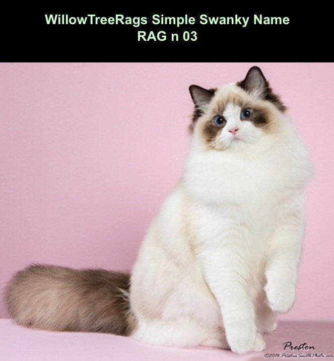 Ragdoll - willowtreerags Simple swanky name