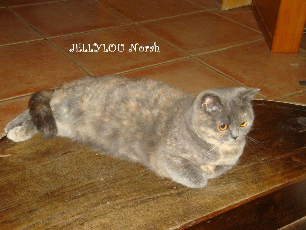 Jellylou Norah