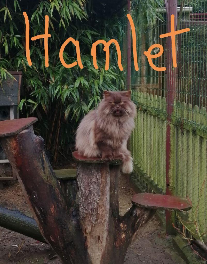 Hamlet d'opale et caramel