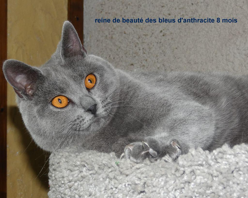 reine de beauté des bleus d'anthracite
