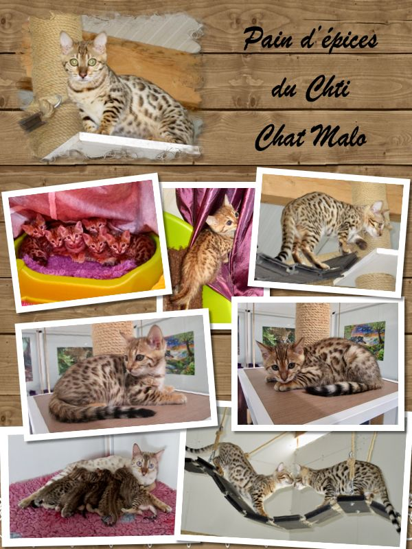 Pain d'épices Du Chti Chat Malo