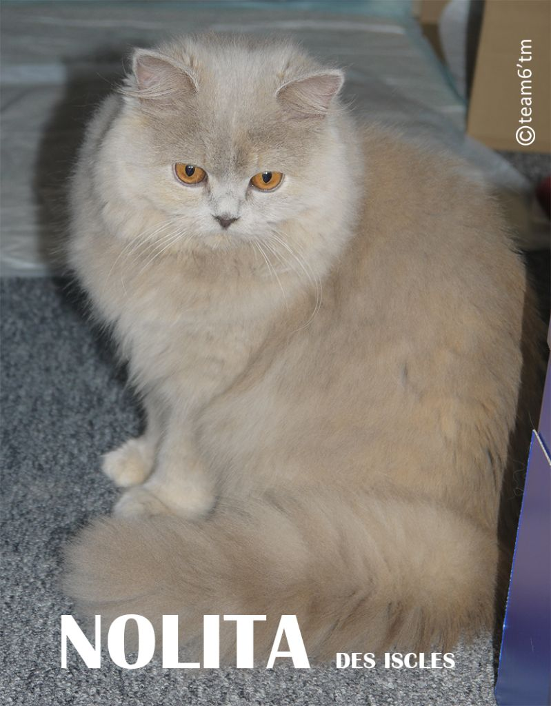 Nolita Des Iscles