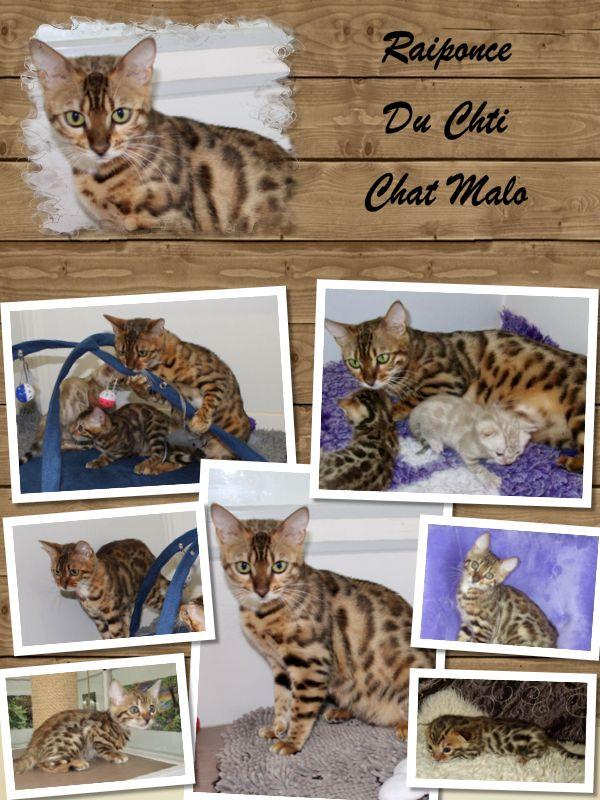 Raiponce Du Chti Chat Malo