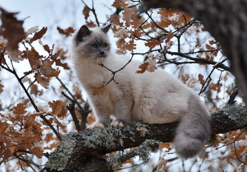 Nina ricci Meow Meow