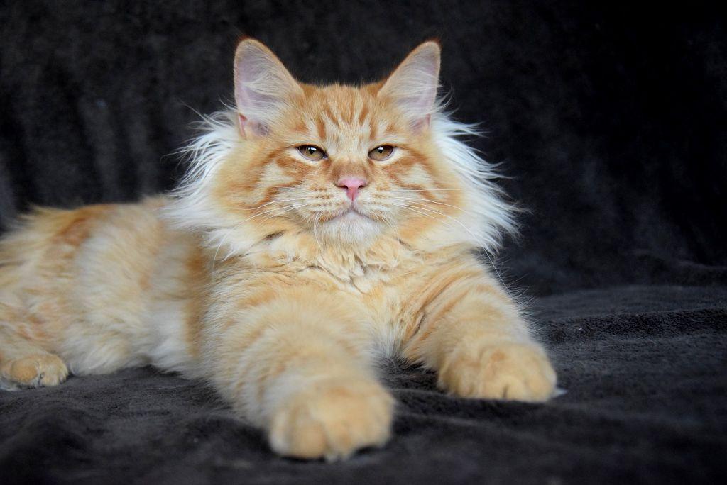 Harry phantom cats