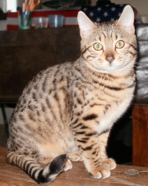 Hangel De Johnson's Cats