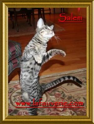 Savannah - Salem of serengetisavana