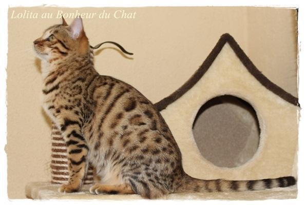 Lolita Au Bonheur Du Chat