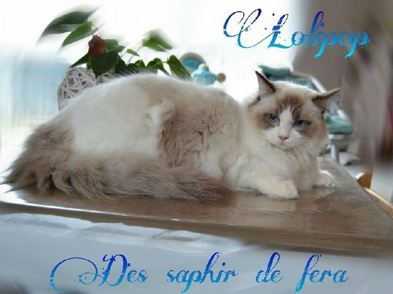 Lolipop Des Saphir De Fera