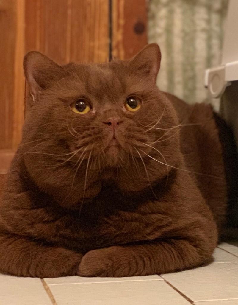 la murr*cat's Garfield