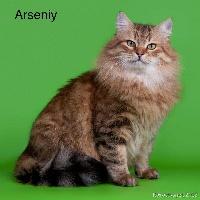 Arseniy volzhskaya Titre Initial
