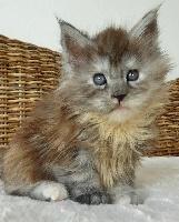 Gratuit poilu ébène chatte