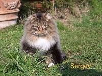 CH. Sergey di omeljan Sans Affixe