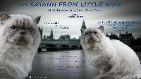 CH. Xayann from little nina
