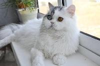 ostrov'ok Cat william
