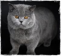 gros noir chatte et cul pics