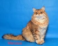 Marysya onix gloria