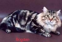 Titre Initial Bogdan volzhskaya