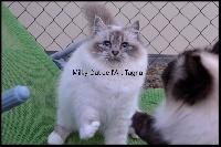 Milky cat De L'art Tagnan