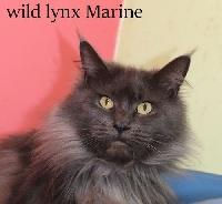 Wild Lynx Marine