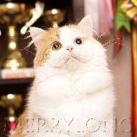 merrylong's Ulian
