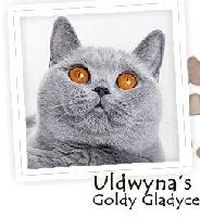 uldwyna's Goldy gladyce