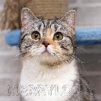 merrylong's Princess