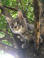 noir Azz chatte