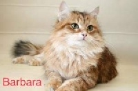CH. Barbara vemas