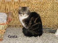 Greta silva line Titre Initial