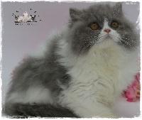 Photo de chat perdu à Rilhac Rancon.