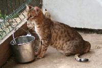 shearia's Sundary