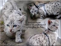 silverstorm Winter wonderland