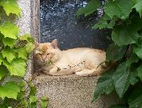 cat'y mini jungle's diablo