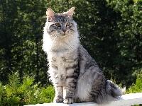 rgj cat's Rasputnik