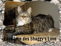 Easy love des shaggy's love