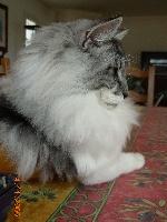 Eärendil des chatalans