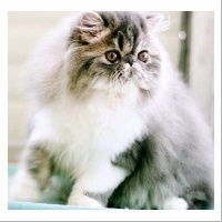 willstoncats Lucci
