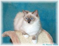 Sacha's Cats French riviera