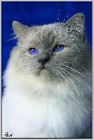 CH. Vowgly du leman bleu
