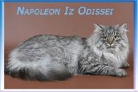 CH. Napoleon iz odissei