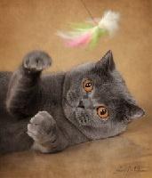 Kupava bliss cat land