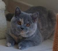 Esenia ethos empire of cat