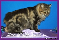CH. Mars night lynx