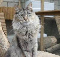 catsheavens Montana