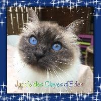 Jazzie Des Clayes d'Eden
